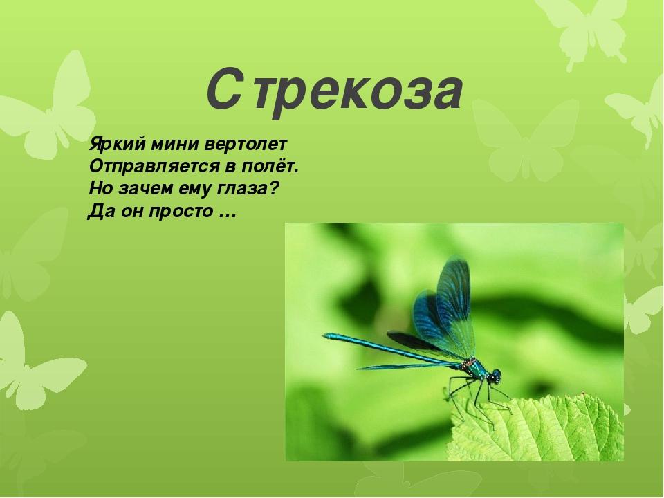 стихи про стрекозу как