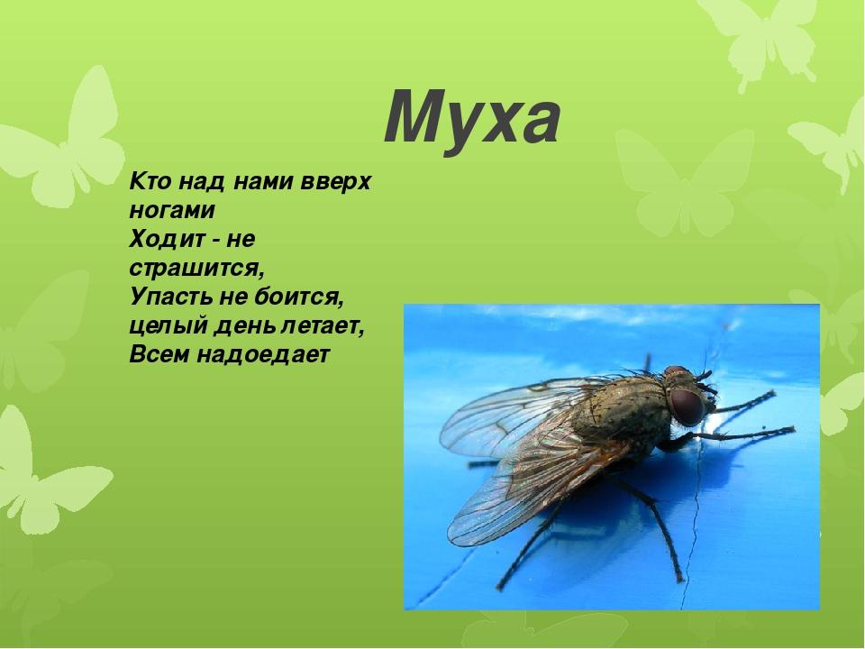 Загадки с картинками о насекомых
