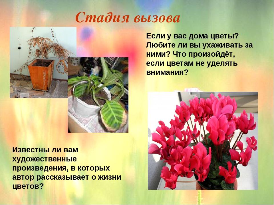 просто рассказ о неизвестном цветке картинки лично