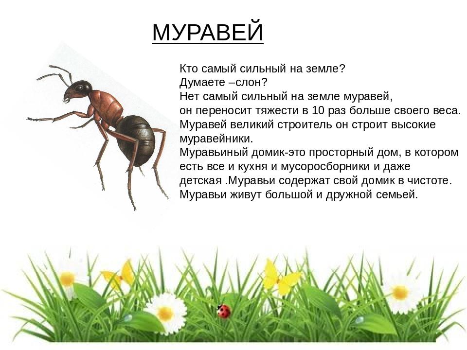 факты о муравьях в картинках костей набор