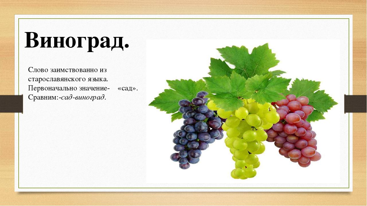 Стихи с виноградом