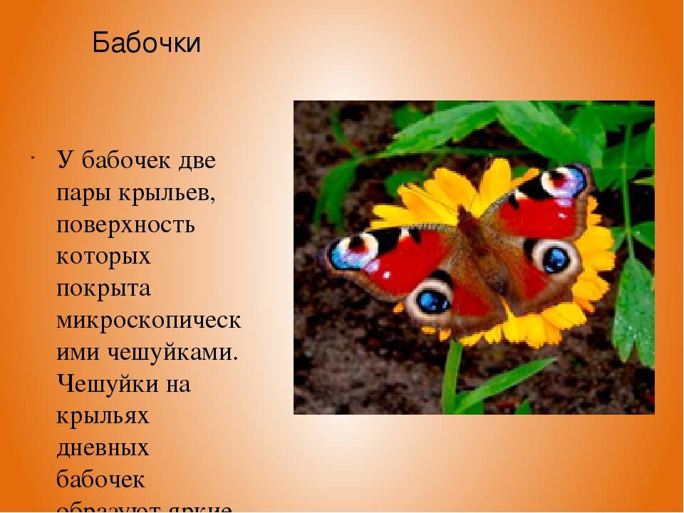 Бабочки У бабочек две пары крыльев, поверхность которых покрыта микроскопичес...