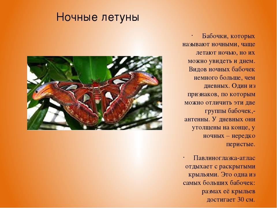 Ночные летуны Бабочки, которых называют ночными, чаще летают ночью, но их мож...