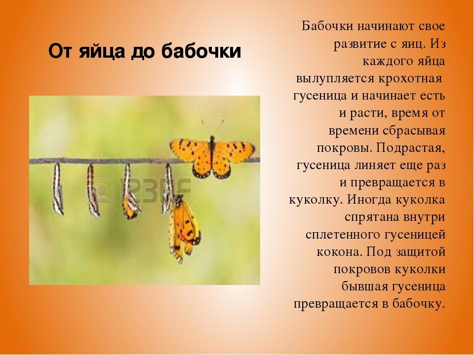 Бабочки начинают свое развитие с яиц. Из каждого яйца вылупляется крохотная г...