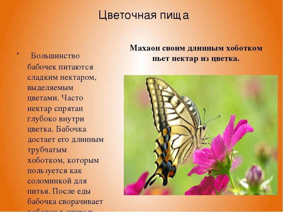 Цветочная пища Большинство бабочек питаются сладким нектаром, выделяемым цвет...