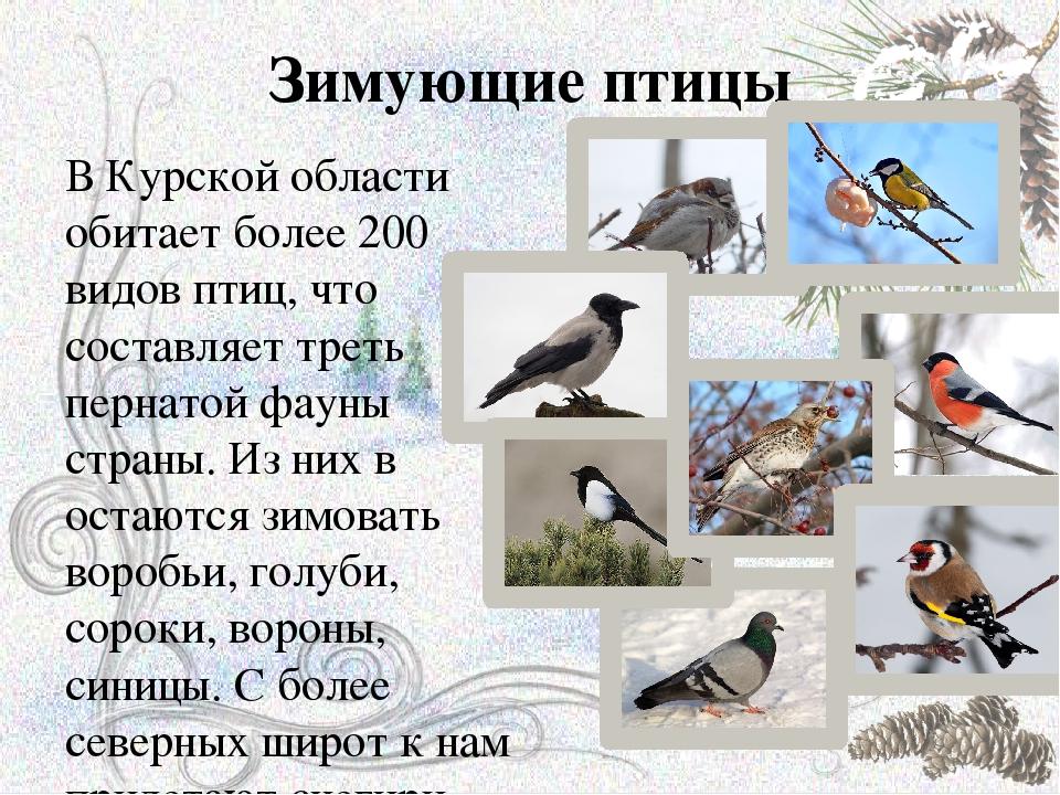 предмет птицы зимующие в ярославской области фото с названиями острове патмос языческие