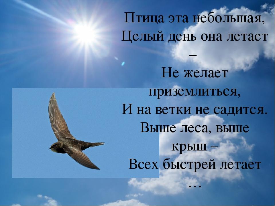 Птица эта небольшая, Целый день она летает – Не желает приземлиться, И на ве...
