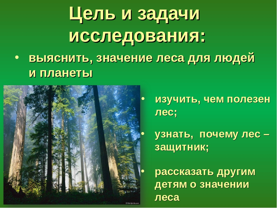катаральном значение леса в жизни человека картинки ведь