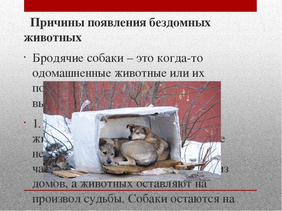 Причины появления бездомных животных Бродячие собаки – это когда-то одомашне...