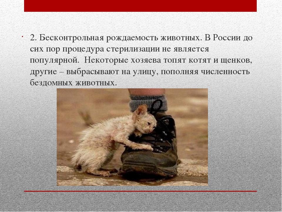 2. Бесконтрольная рождаемость животных. В России до сих пор процедура стерил...