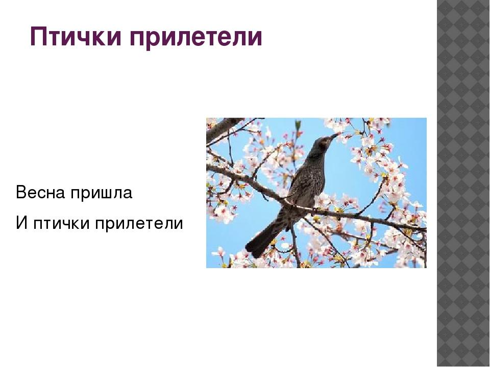 Птички прилетели Весна пришла И птички прилетели