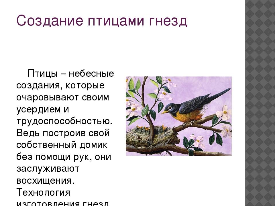 Создание птицами гнезд Птицы – небесные создания, которые очаровывают своим...
