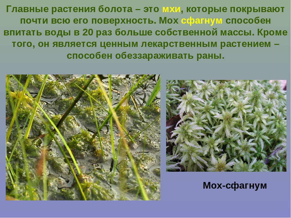 Растения болота картинки и названия