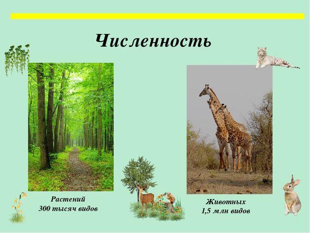 Открытый урок по географии 8 класс растительный и животный мир россии
