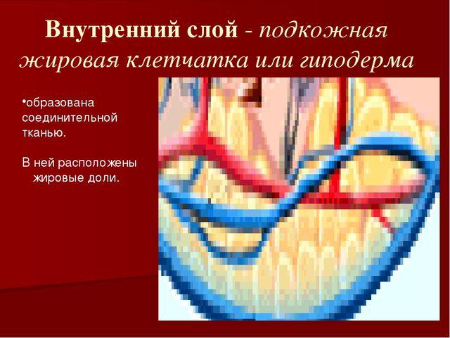 Подкожная жировая клетчатка образована тканью