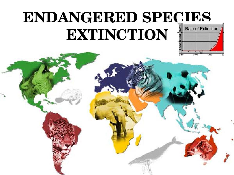 animal extinction paper