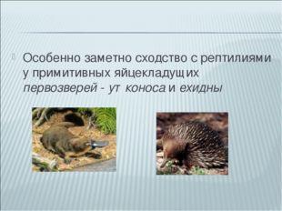 Особенно заметно сходство с рептилиями у примитивных яйцекладущих первозверей