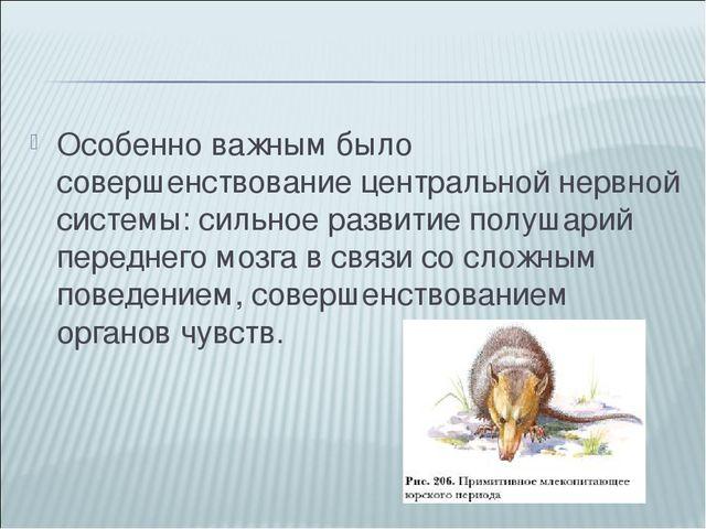 Особенно важным было совершенствование центральной нервной системы: сильное р...
