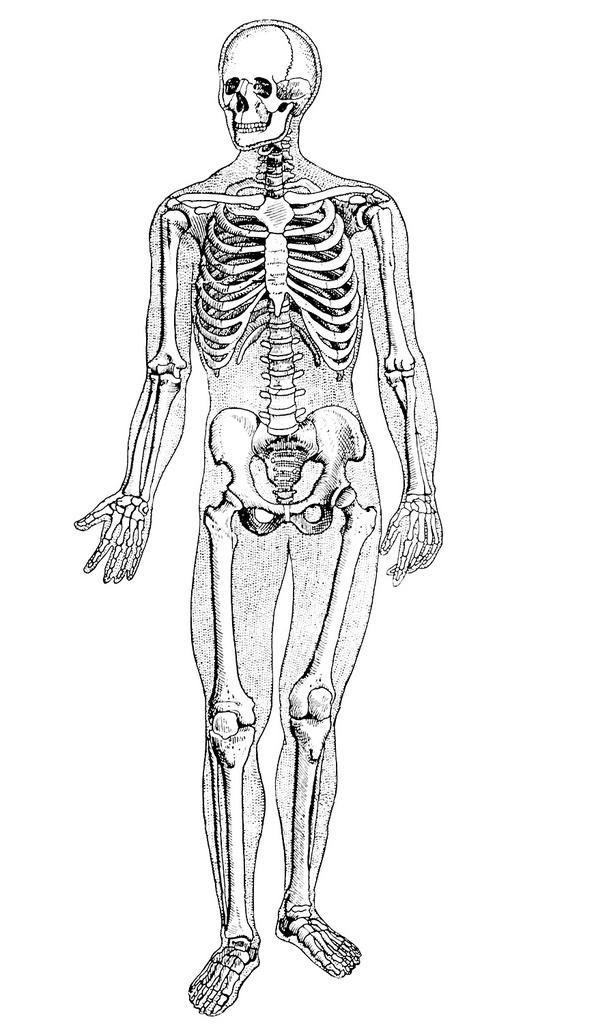 Человек картинка тела без надписей