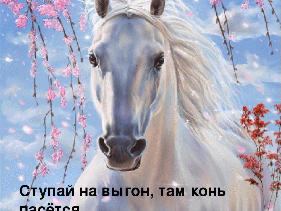 Красивые открытки с лошадьми 60