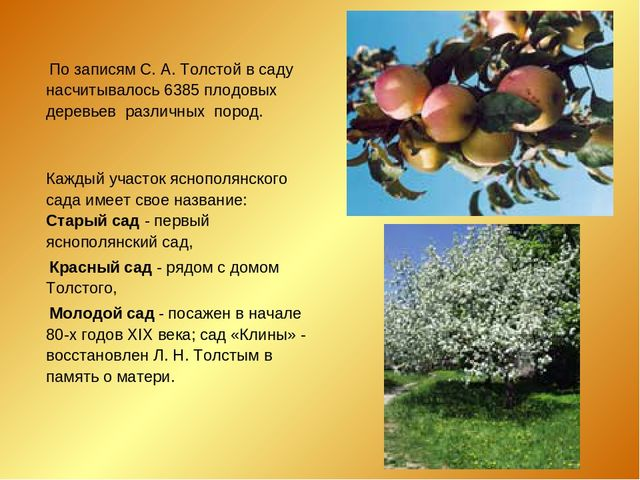 По записям С. А. Толстой в саду насчитывалось 6385 плодовых деревьев различн...