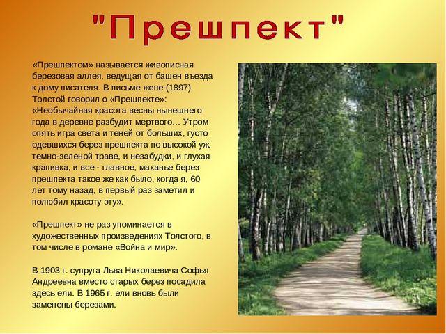 «Прешпектом» называется живописная березовая аллея, ведущая от башен въезда...