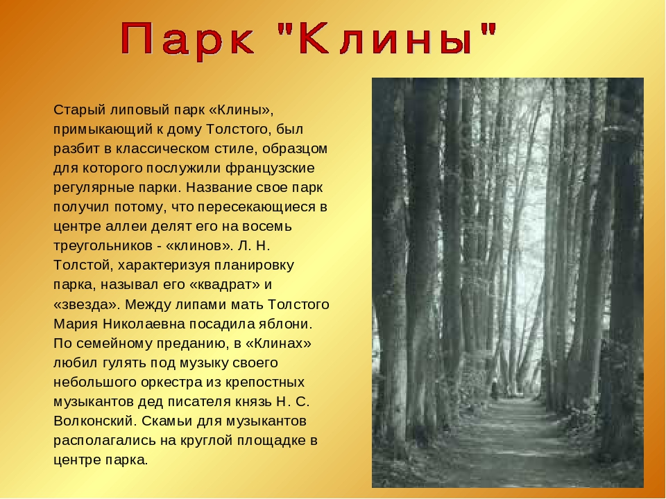 Старый липовый парк «Клины», примыкающий к дому Толстого, был разбит в класс...