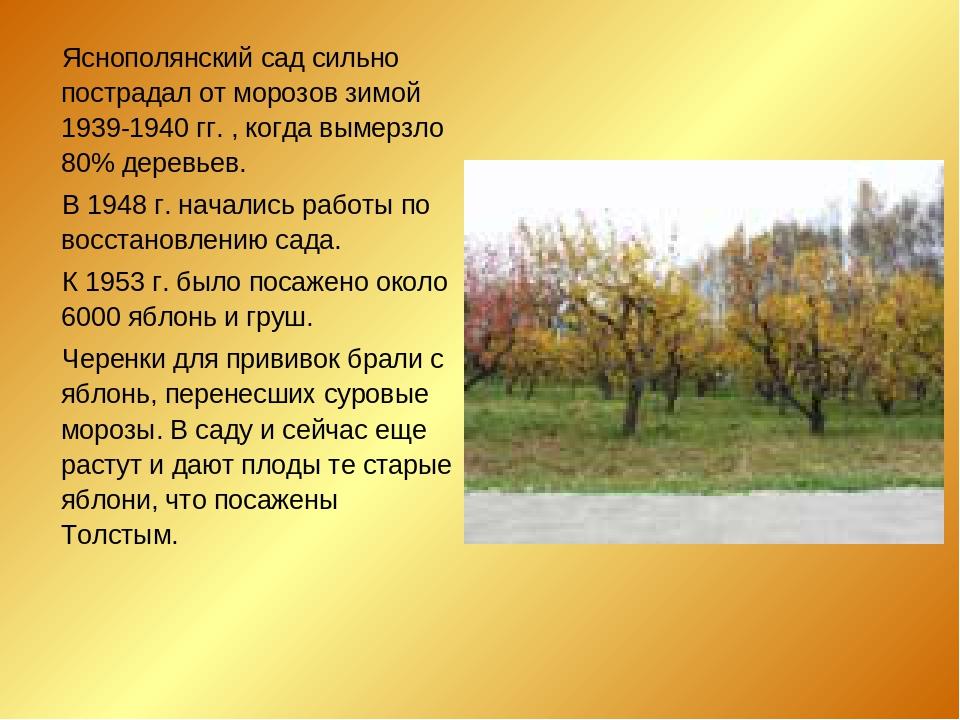 Яснополянский сад сильно пострадал от морозов зимой 1939-1940 гг. , когда вы...