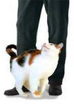 вариант почему кот пытается удариться головой о человека газобетона особенности