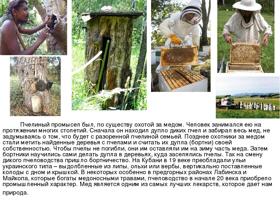 Пчелиный промысел был, по существу охотой за медом. Человек занимался ею на...