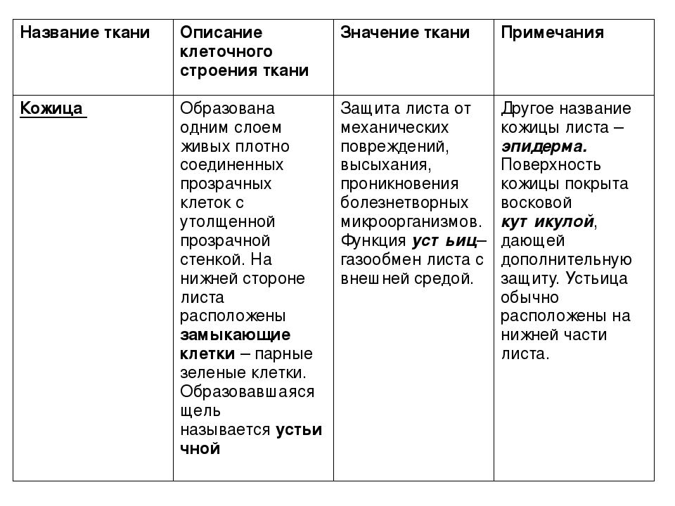 клеточное строение листа таблица 6 класс гдз