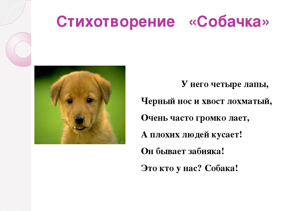 стихи о собачке в картинках избу через дверь