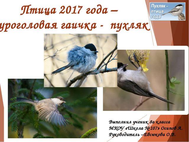 скачать торрент птица 2017 - фото 6