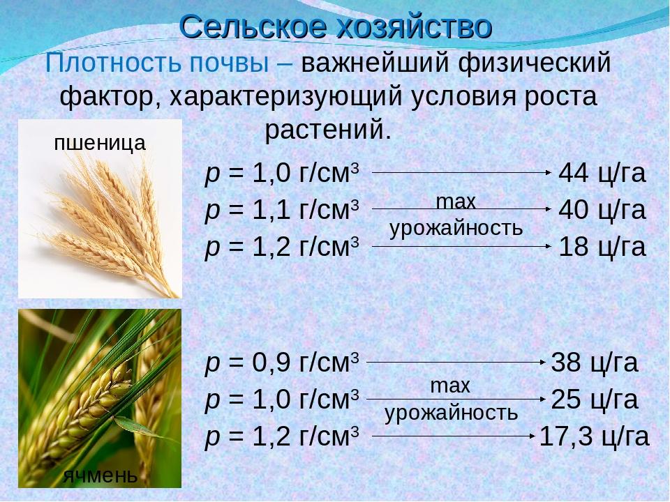 Сельское хозяйство Плотность почвы – важнейший физический фактор, характеризу...