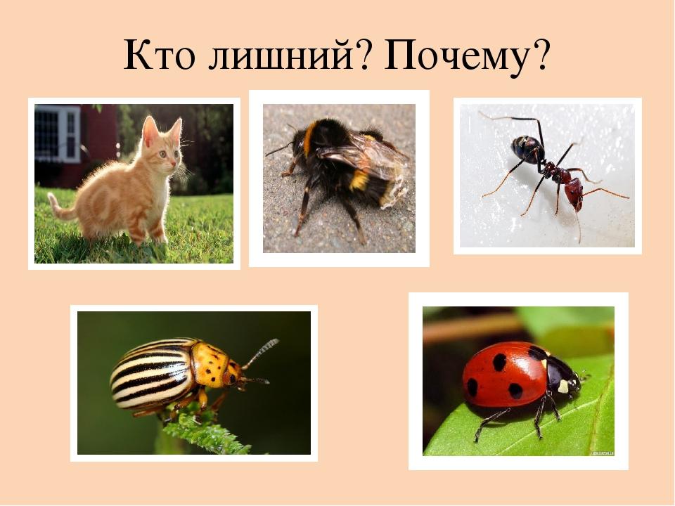 техника картинка четвертый лишний насекомые исполнения
