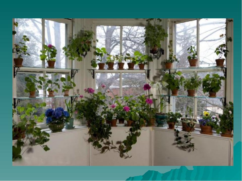 Сад на окне: полки, кронштейны, выбор растений. - участок и .