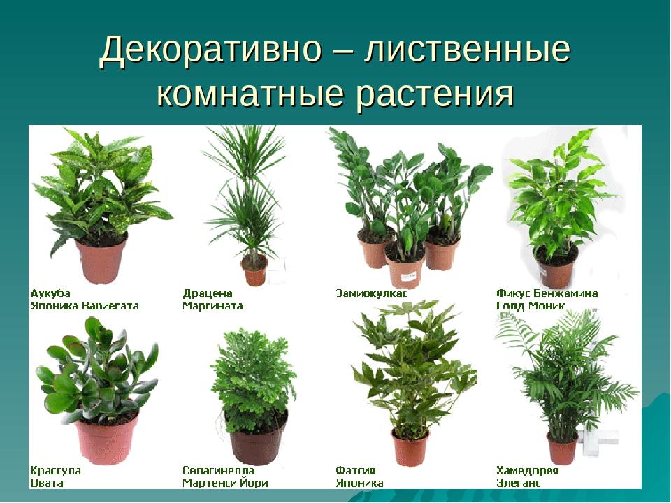 Виды комнатных растений в картинках все о них