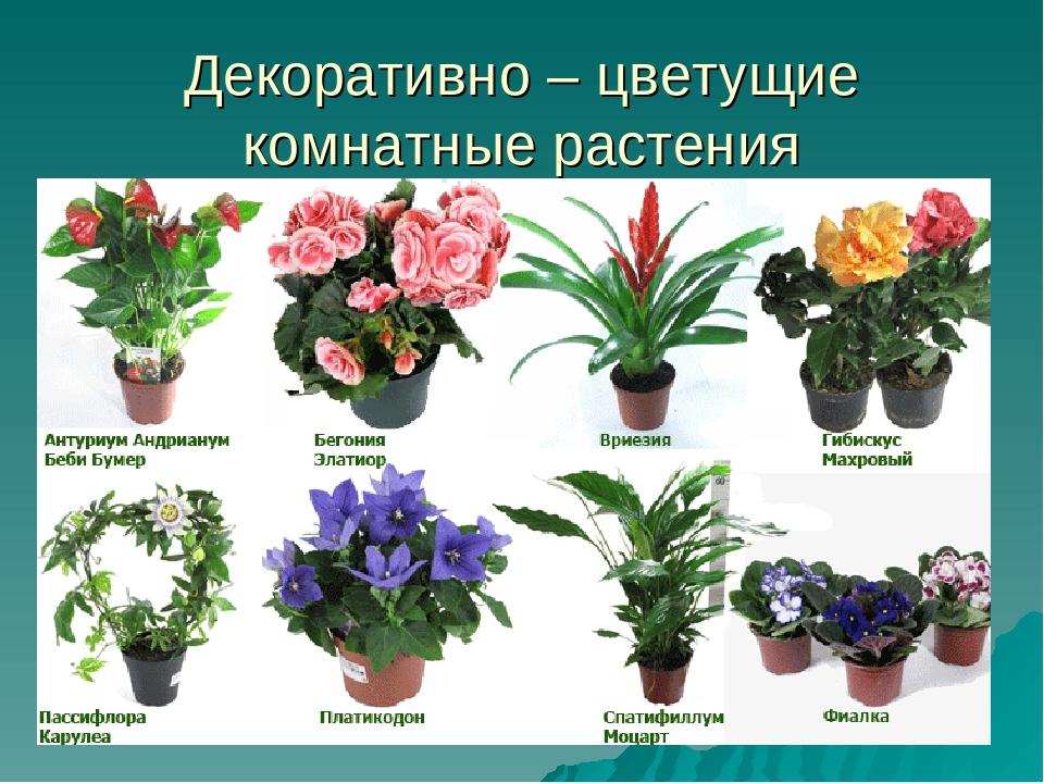 Какие декоративные цветы с