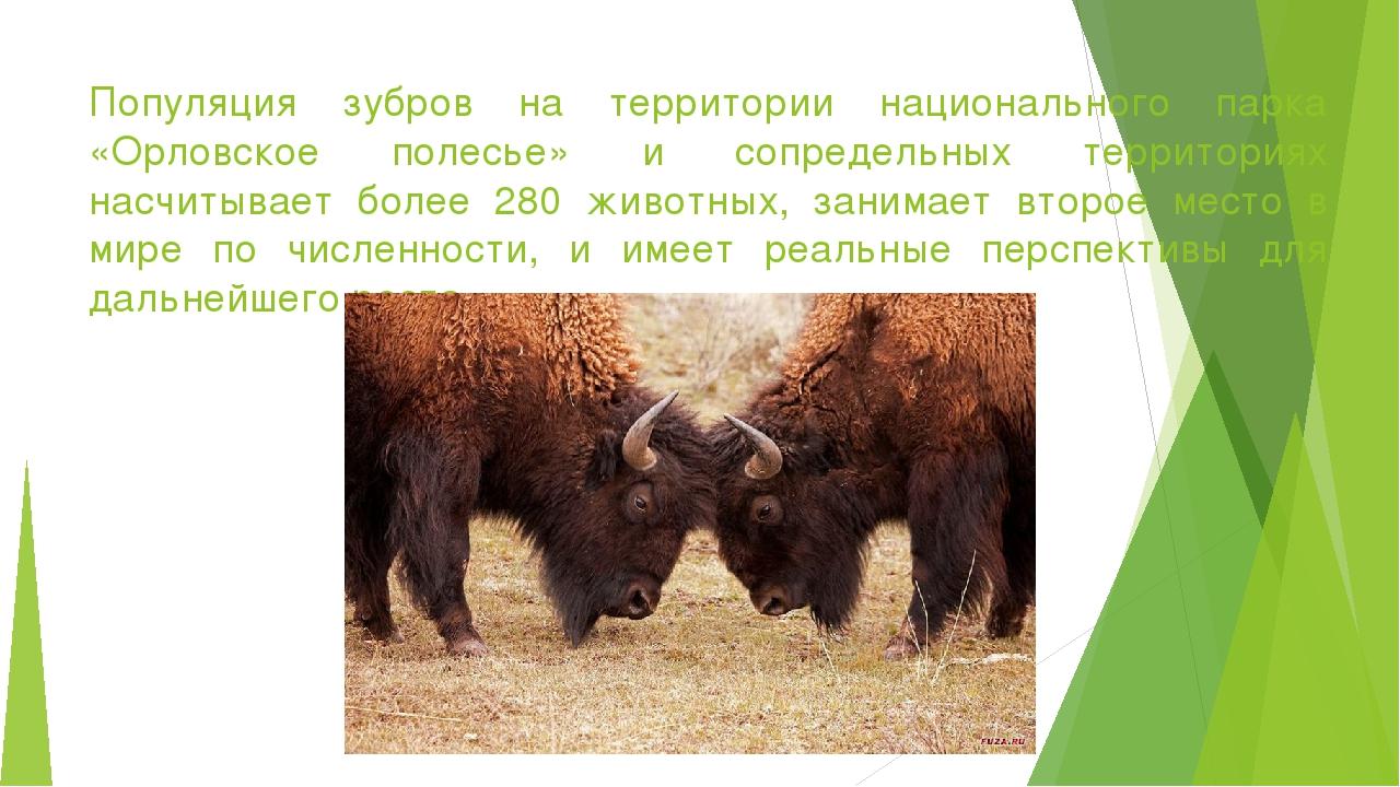 сочетать зубр описание интересные факты фото многолетних дискуссий латвии