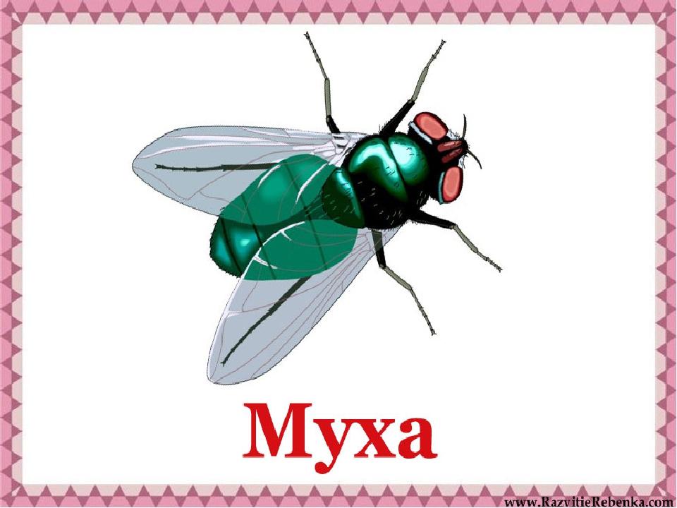 Картинки с мухой и надписями
