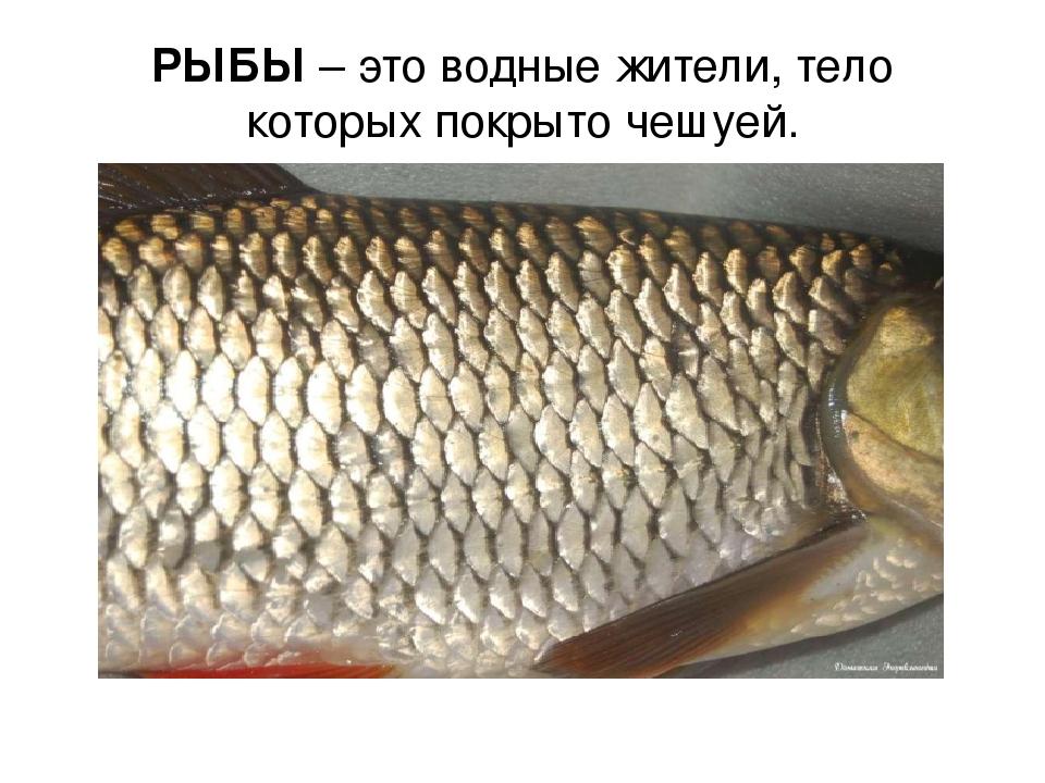 РЫБЫ – это водные жители, тело которых покрыто чешуей.