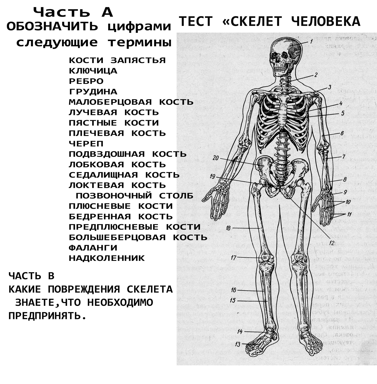 Тесты онлайн по биологии 8 класс анатомия человека решать бесплатно и без регистрации