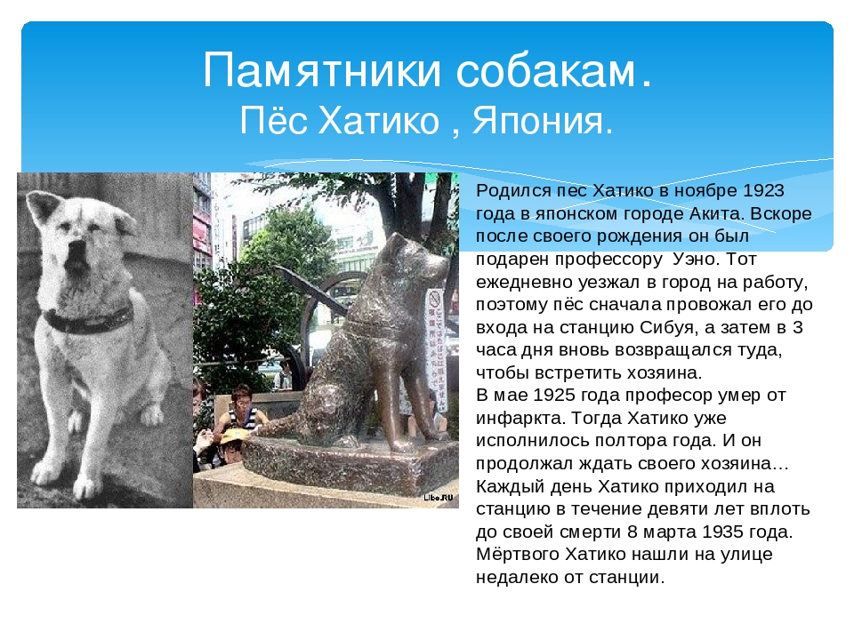 Памятник хатико где находится