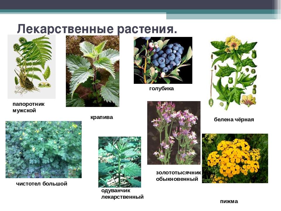 растения леса беларуси в картинках с названиями свое время