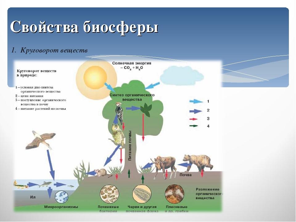 биологический географии круговорот гдз по ;нарисуйте