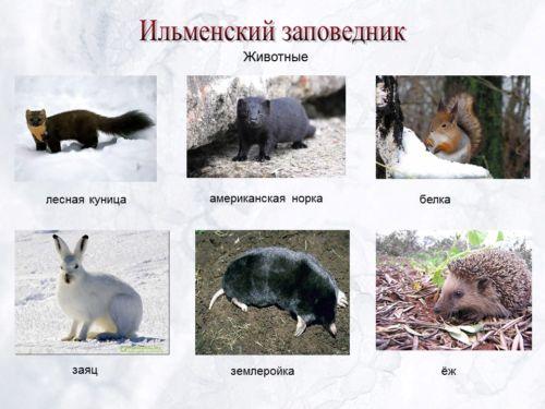 Животные ильменского заповедника фото