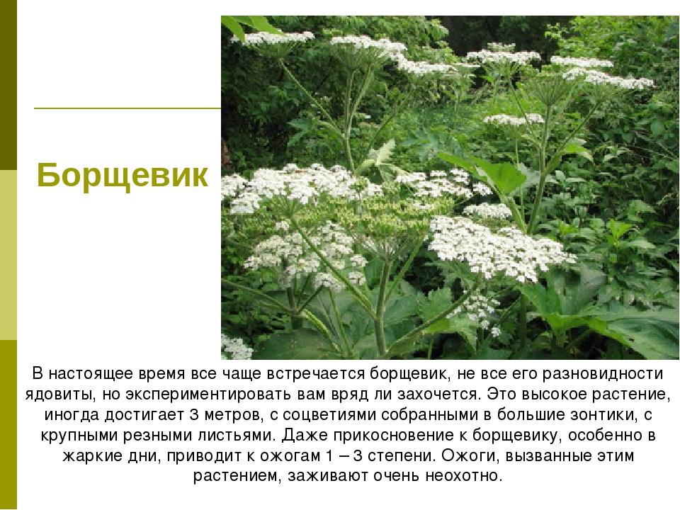 ядовитые травы украины фото и описание можете настроить