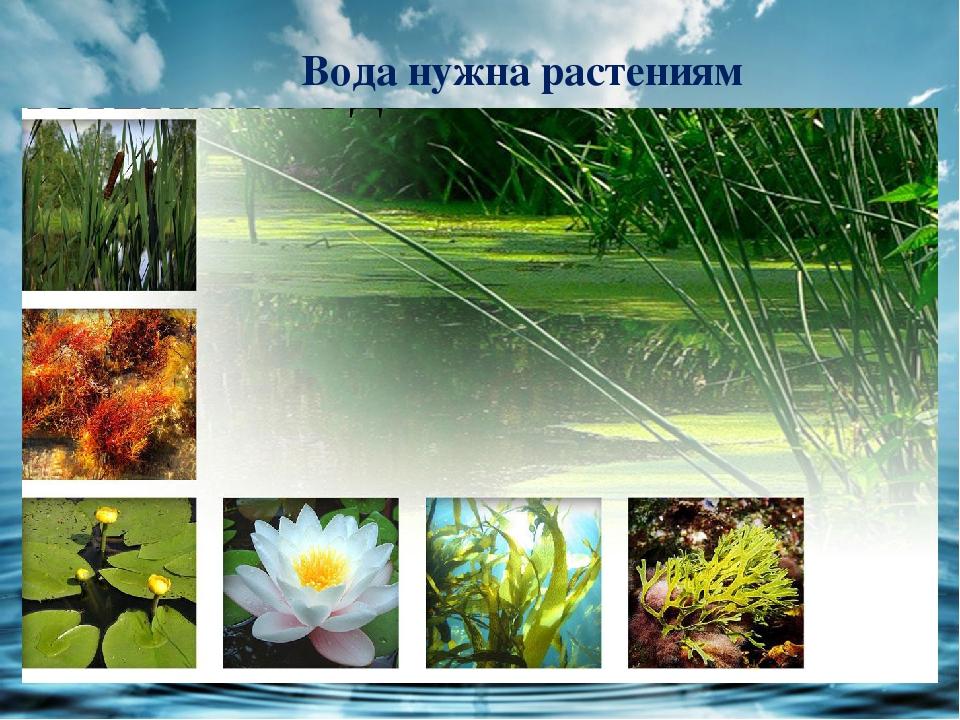 растениям нужна вода в картинках при помощи