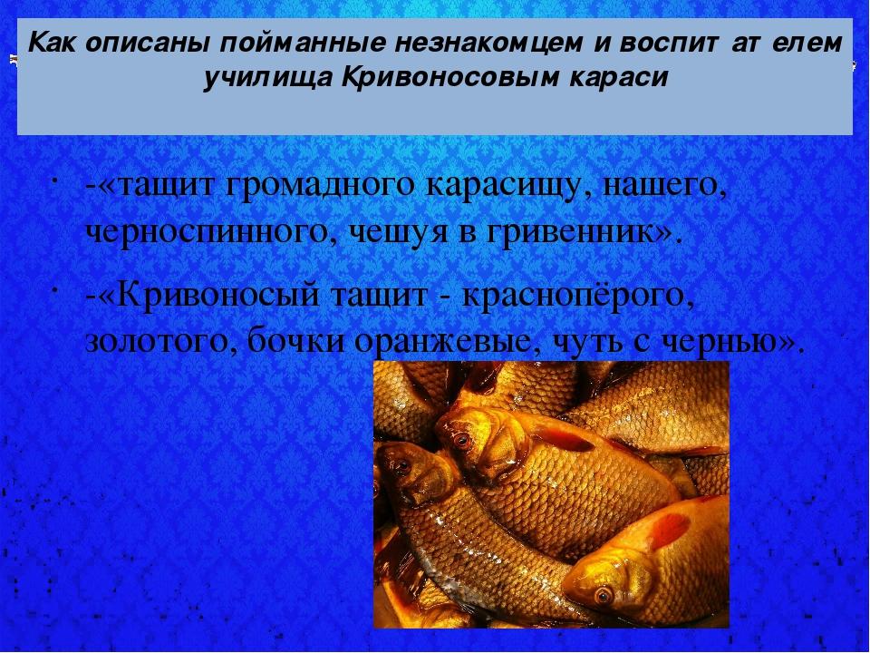 Как описаны пойманные незнакомцем и воспитателем училища Кривоносовым караси...