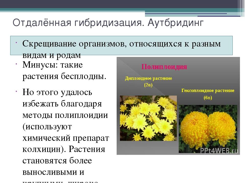 картинки гибридизации растений это вполне